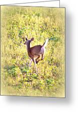 Deer-img-0456-001 Greeting Card