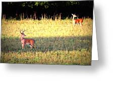 Deer-img-0627-001 Greeting Card