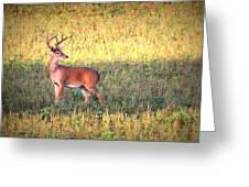Deer-img-0627-002 Greeting Card