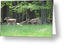 Deer In A Group Greeting Card