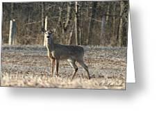 Deer In Field Greeting Card