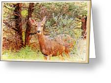 Deer In Forest Greeting Card
