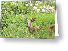 Deer In Magee Marsh Greeting Card