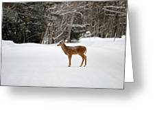 Deer In Road Greeting Card