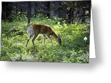 Deer In Sunlight Glen Greeting Card