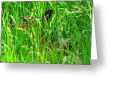 Deer In Tall Grass Greeting Card