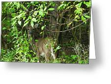 Deer In The Bushes Greeting Card