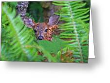 Fawn In The Ferns Greeting Card