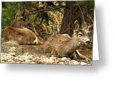 Deer In The Rockies Greeting Card