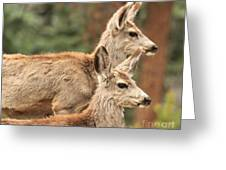 Deer In The Rocky Mountains Greeting Card