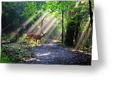 Deer In The Sun Greeting Card
