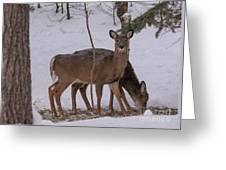 Deer In The Trees Greeting Card
