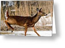 Deer Jump Greeting Card