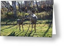Deer Kiss Greeting Card