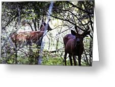 Deer Looking For Food Greeting Card