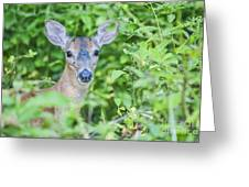 Deer Me Greeting Card by Joe McCormack Jr