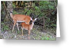 Deer Mom 2 Greeting Card