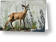 Deer On A Walkabout Greeting Card