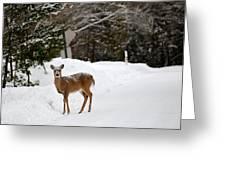 Deer On Side Of Road Greeting Card