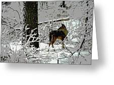 Deer On Snowy Trail Greeting Card