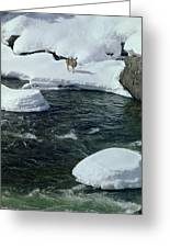 104618-v-deer On The Snow Bank Greeting Card