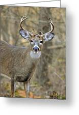 Deer Pictures 445 Greeting Card