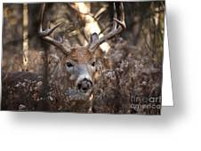 Deer Pictures 449 Greeting Card