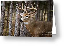 Deer Pictures 508 Greeting Card