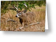 Deer Pictures 525 Greeting Card