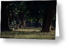 Deer Portrait Greeting Card