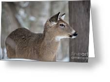 Deer Profile Greeting Card