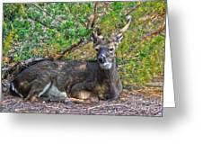 Deer Relaxing Greeting Card