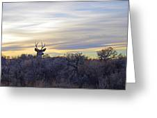 Deer Ridge - Sunset Buck Greeting Card