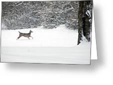 Deer Running Greeting Card