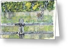 Deer Scene Greeting Card