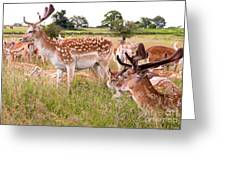 Deer Standing Up Greeting Card