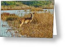 Deer The Point Hatteras Nc 2 12/5 Greeting Card