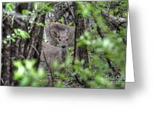 Deer Through The Trees Greeting Card