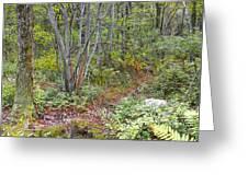 Deer Trail Early Autumn Pocono Mountains Pennsylvania Greeting Card