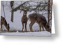 Deer With A Leg Up Greeting Card