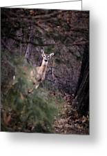 Deer's Stomping Grounds. Greeting Card