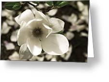 Defining Spring Greeting Card