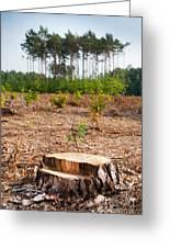 Woods Logging One Stump After Deforestation  Greeting Card