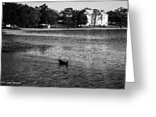 Defuniak Lake  Greeting Card