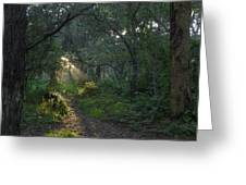 Del Monte Forest Pacific Grove Ca Greeting Card