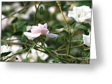 Delicate As A Rose Greeting Card