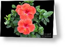 Delicate Beauties Greeting Card