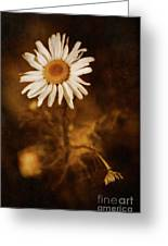 Delicate Daisy Greeting Card