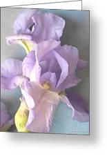 Delicate Dance Of The Iris Flower Greeting Card