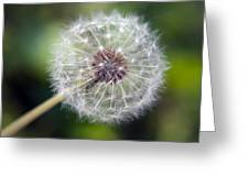 Delicate Dandelion Greeting Card